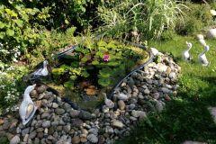 Gartenteich mit Wasserrose